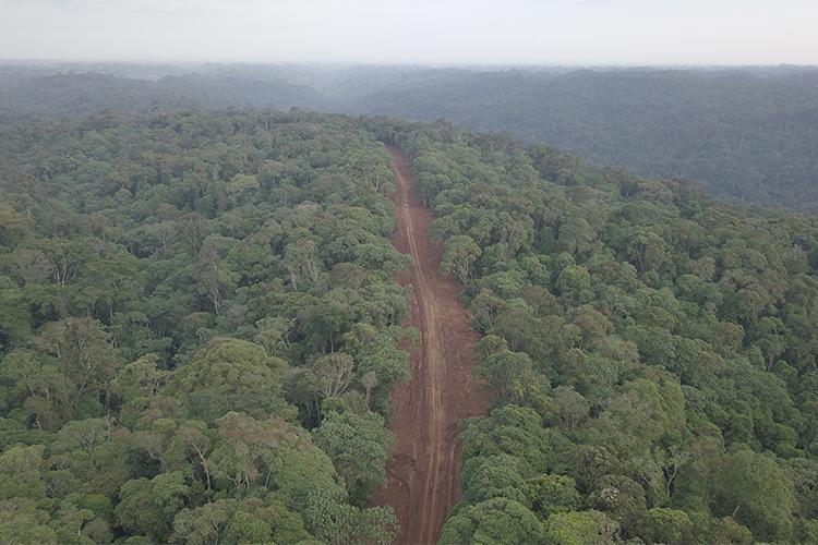 Kenya forest
